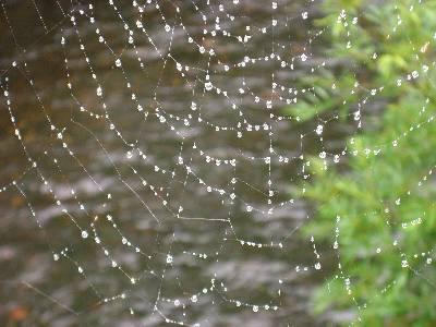 ヨッピ橋にかかっていたクモの巣