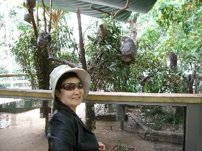 コアラを見てうれしそうなお義母さん