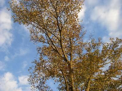 青空と木のコントラスト