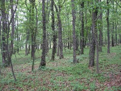 整備された林