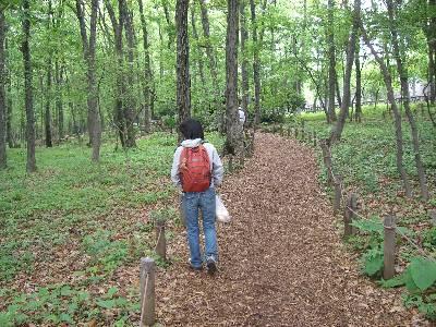 林の中の遊歩道