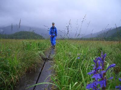 木道を歩く奥村と、木道沿いに咲く花
