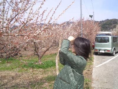 梅の写真を撮る妻