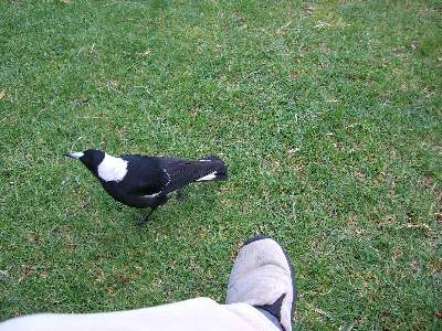 エサを狙う鳥