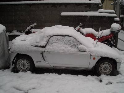 雪が積もったビート