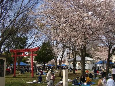 正面ゲート入ってすぐの鳥居と桜