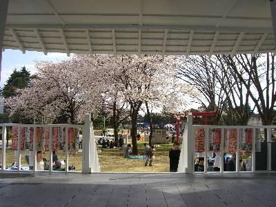 鳥居の近くにある東屋から見た桜
