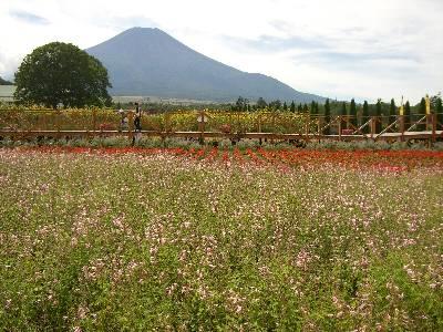 富士山とサルビア