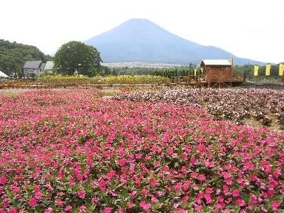 富士山とサンパチェンス (?)