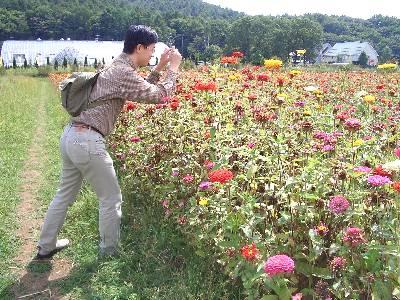 百日草の写真を撮る奥村