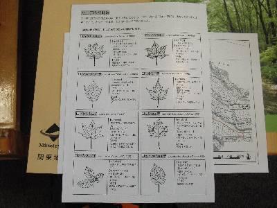色々な種類のカエデの説明