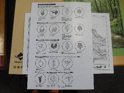 那須の森で見る木の実や葉っぱの説明