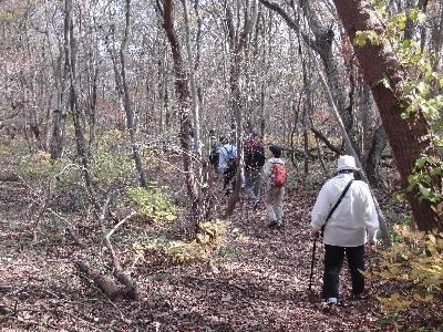 那須の森の中を歩く参加者