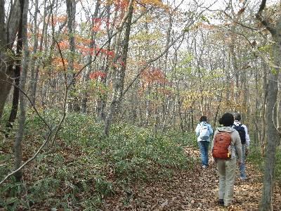 森を歩く参加者
