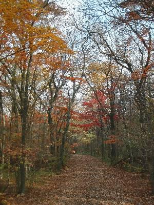 紅葉した木が多い部分