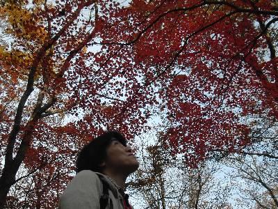 紅葉した葉を見上げる妻