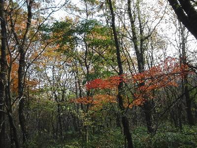 紅葉が綺麗な道
