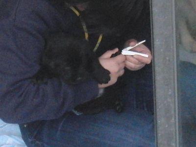 爪を切られる子犬