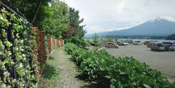 花のナイアガラと富士山