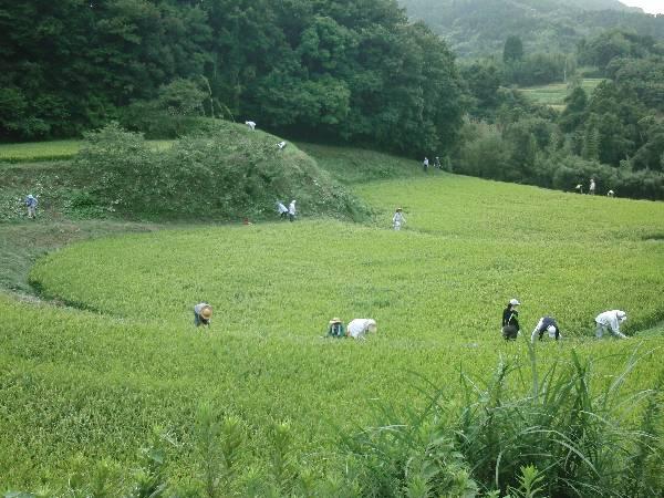 棚田トラストの田んぼで草刈り中
