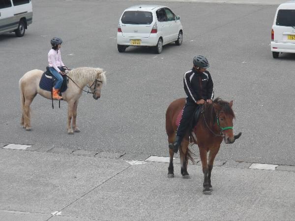 港に来ていた馬 2 頭