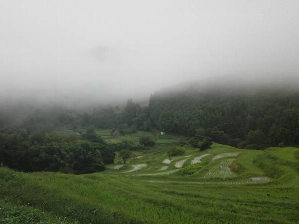 雲が低く垂れ込めた大山千枚田