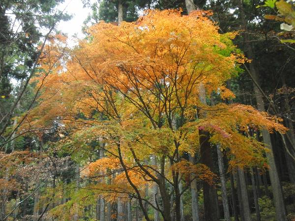 散歩中に見た紅葉