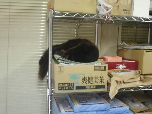 那珂湊駅のマスコット猫おさむ