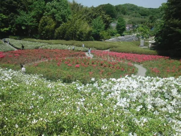 あつぎつつじの丘公園 (上古沢緑地)