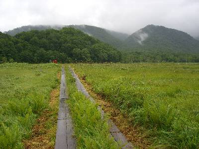 両側が草刈された木道