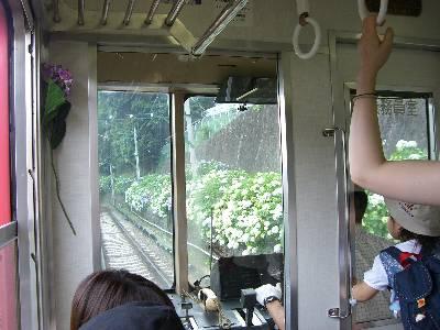 登山電車からみるあじさいい