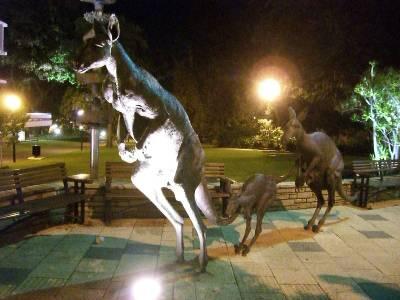 Perth の街中で見かけたカンガルーの親子