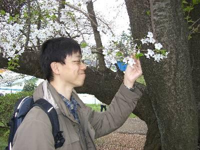 桜を愛でる奥村