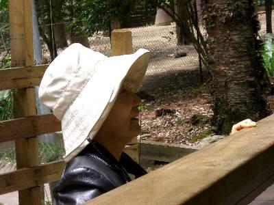 とても熱心にコアラを見るお義母さん