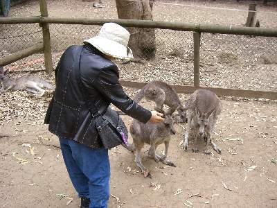 カンガルーに餌付けするお義母さん 1