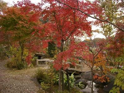紅葉する日本庭園