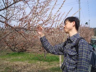 梅を愛でる