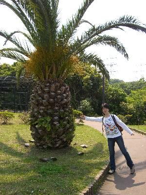 宮崎県の木フェニックス